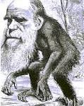 Evoluzione di Darwin